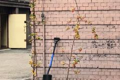 ARBOR  DAY czyli Światowy Dzień Drzewa w SP16