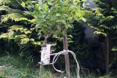 Sadzenie drzewka ósmoklasistów